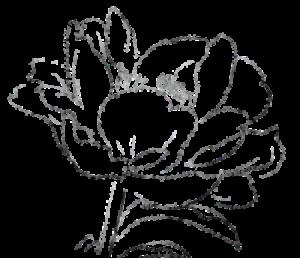 Jeanette flower